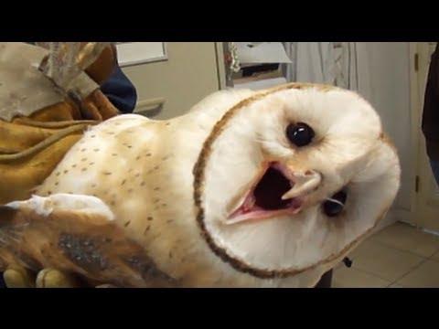 8 Surprisingly Creepy Animals