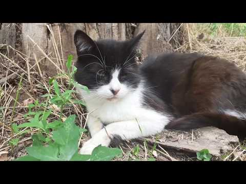 Gentle white and black cat loves to bask in the sun and get a good sleep   Cats are lazy   Cat Manya