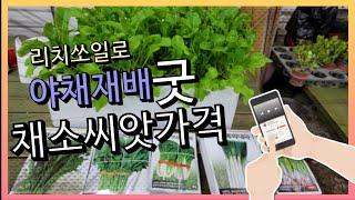 리치쏘일로 야채재배 굿 채소씨앗가격