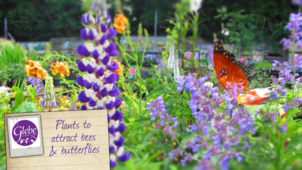 How to attract bees \u0026 butterflies to your garden - YouTube