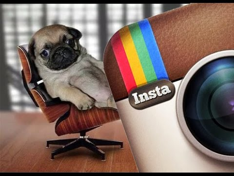 Instagram Pug Videos Compilation | Funny Dogs & Pugs are Awesome