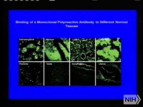 Demystifying Medicine 2013 - Autoimmunity: Disease and Mechanisms