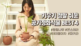 """""""공기 청정기능에 미세먼지 제거까지!""""…"""