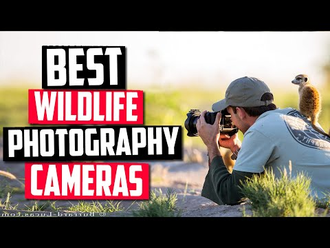 Best Camera For Wildlife Photography in 2020 [Top 5 Picks For Any Budget]