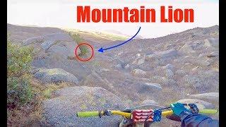 TRACKING DOWN A 600LB MOUNTAIN LION!!! PART 1