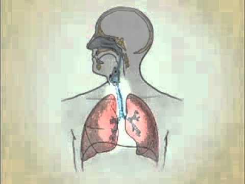 Gripe o resfriado doovi for Trata catarro 7 remedios caseros curar catarro comun