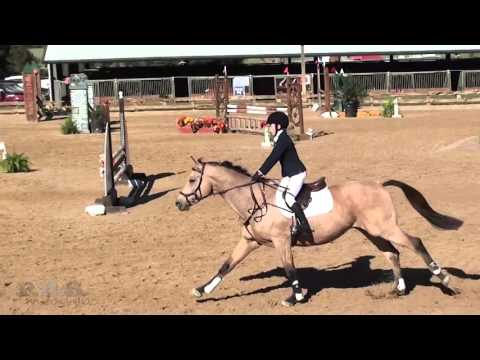Albany Castor & Zendaro  Texas Rose Horse Park Fall Horse Trials 2015