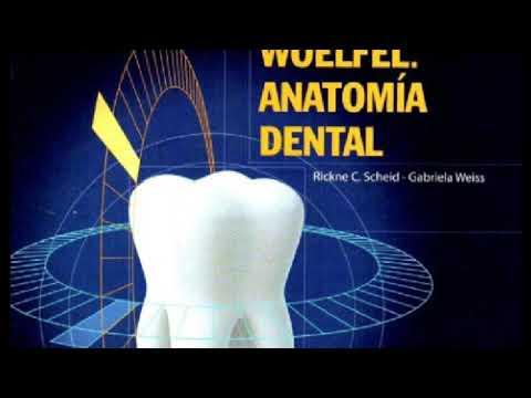 Anatomía Dental - Woelfel PDF from YouTube · Duration:  12 seconds