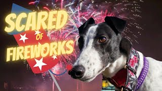 Greyhound scared of fireworks