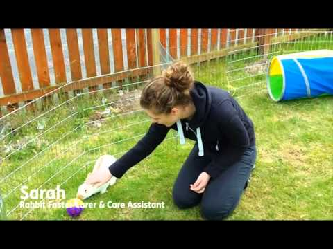 Fairly Beloved Rabbit Care - Application for Support Adoption For Pets 2014