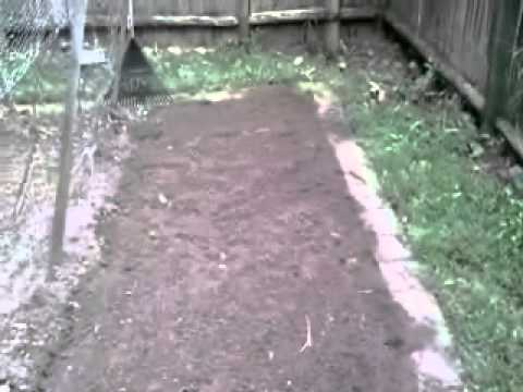 Planting store bought garlic and a garden update
