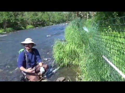 yilmaz karadag ALASKA TRIP RUSSIAN RIVER SALMON FISHING 5/8