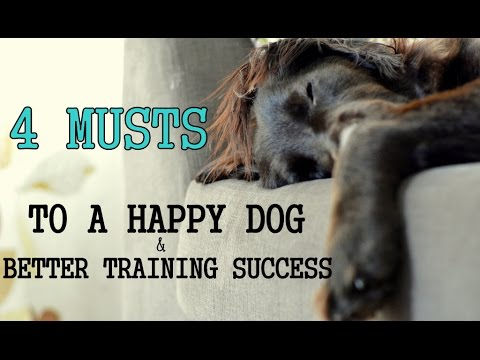 4 MUSTS Of Dog Training - Have A Happy Dog