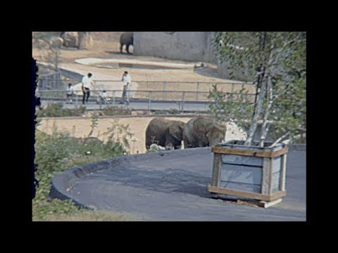 Los Angeles zoo 1967 archive footage