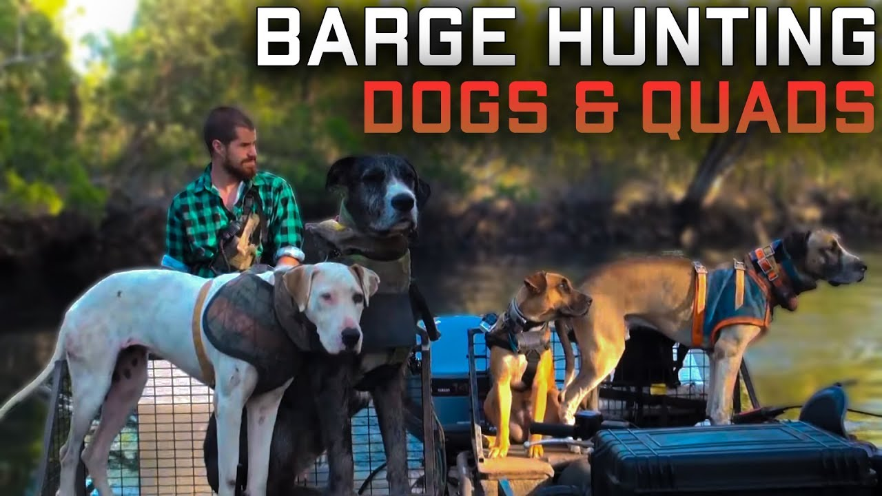 Barge Hunting Dogs & Quads, Boars mob pigs, feral pigs