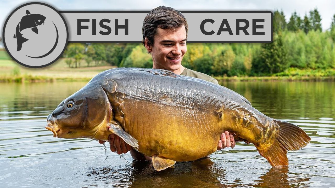 How To Handle Big Fish For Catch and Release - Carp Care Guide