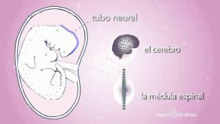 Cómo crece su bebé 1er mes