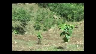 DA-BAR-CEMIARC: CPAR on Upland Diversified Farming Systems in Sultan Kudarat, Reg. 12 Part 1
