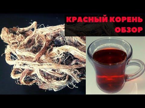Копеечник чайный польза и противопоказания