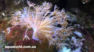 Море  Аквариум Minijiang(, 2014-02-24T22:26:24.000Z)