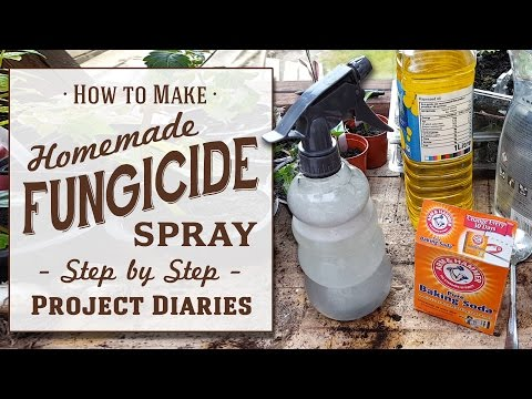 ★ How to: Make Cheap Homemade Organic Fungicide (Complete St