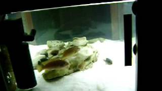 Coffee Table Aquarium.avi