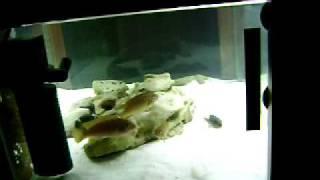 Coffee Table Aquarium.avi