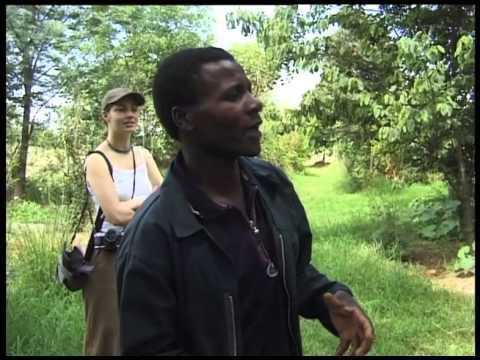 Permaculture - Zimbabwe
