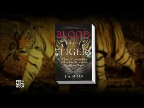 How raising tigers as farm animals drives illegal poaching in the wild
