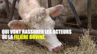 La colère des producteurs de viande bovine