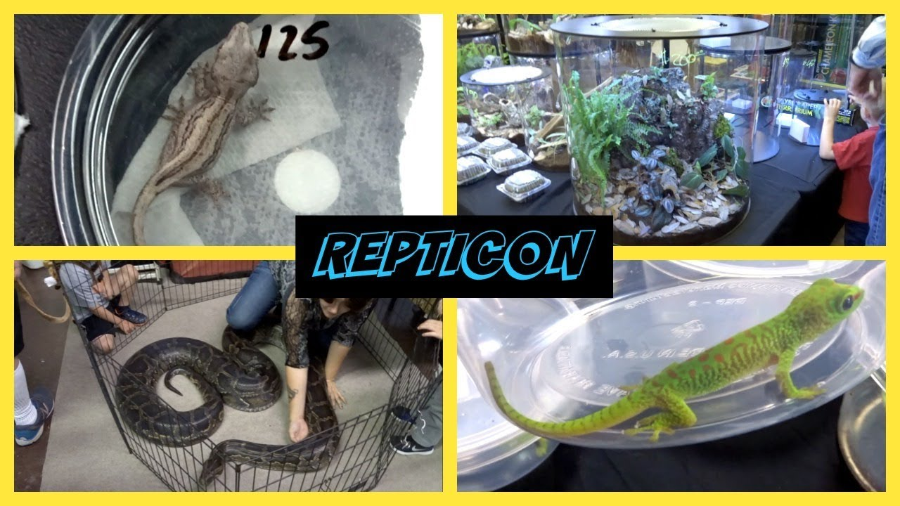 Reptile Show Indiana