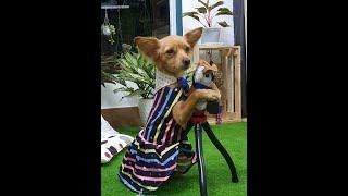DIY #GHOSTHAND Hướng Dẫn Mąy quần áo Cнo (chó) Cún Cưng
