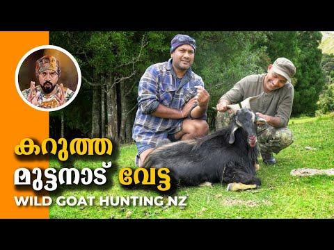 Wild goat hunt NZ, കാട്ടു ആട് വേട്ട,hunting in New Zealand, best goat hunting, Goat hunting,