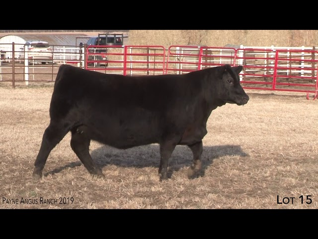 Payne Angus Ranch Lot 15