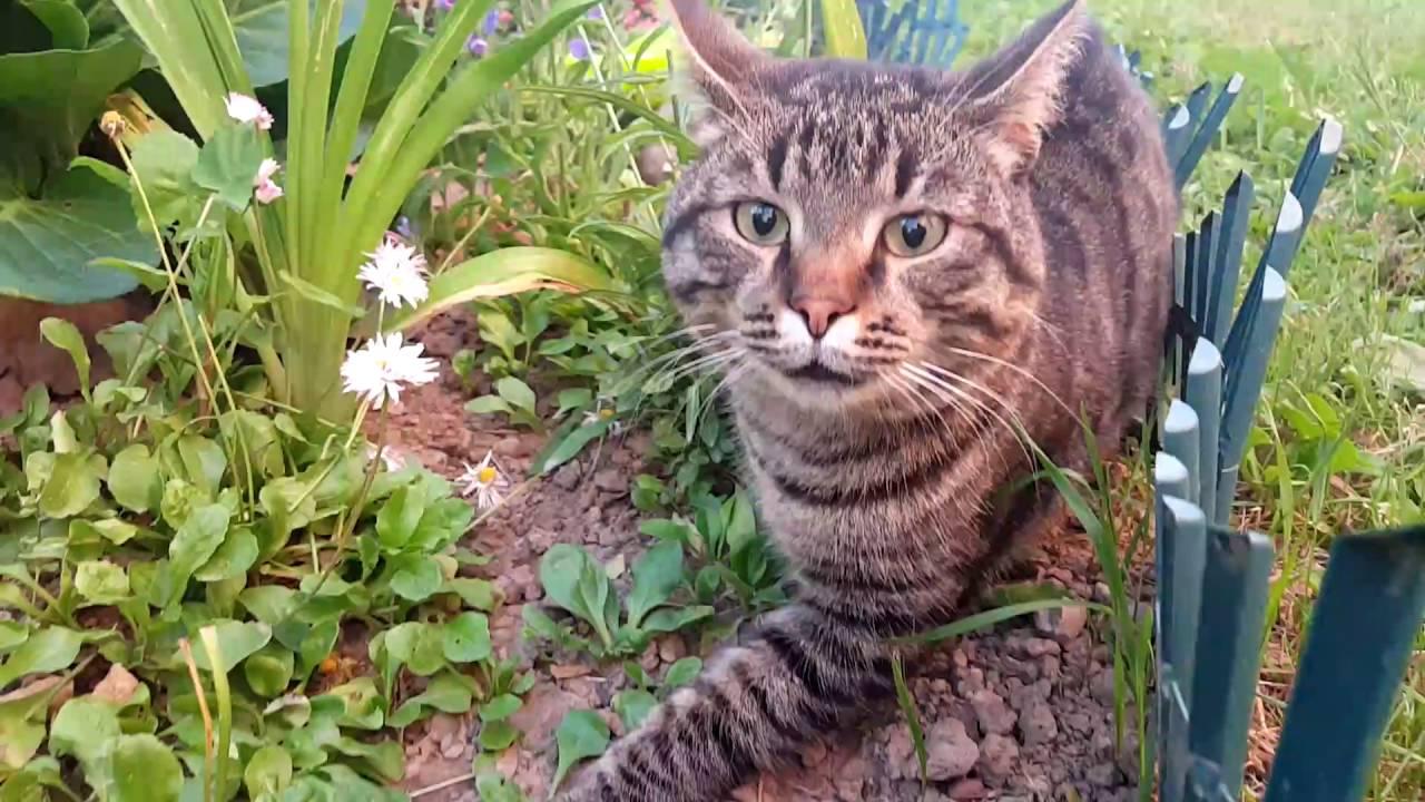 Кот и кошка с котятами... - YouTube