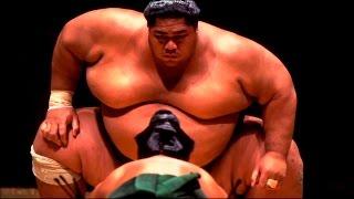 Становая тяга сумо. Часть #58. Советы жиробилдера