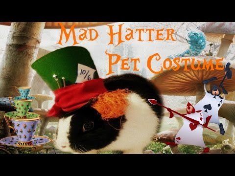 🐰🎩Mad Hatter Pet Costume | Halloween | Alice In Wonderland Inspired🍵