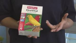 How To Feed Canaries