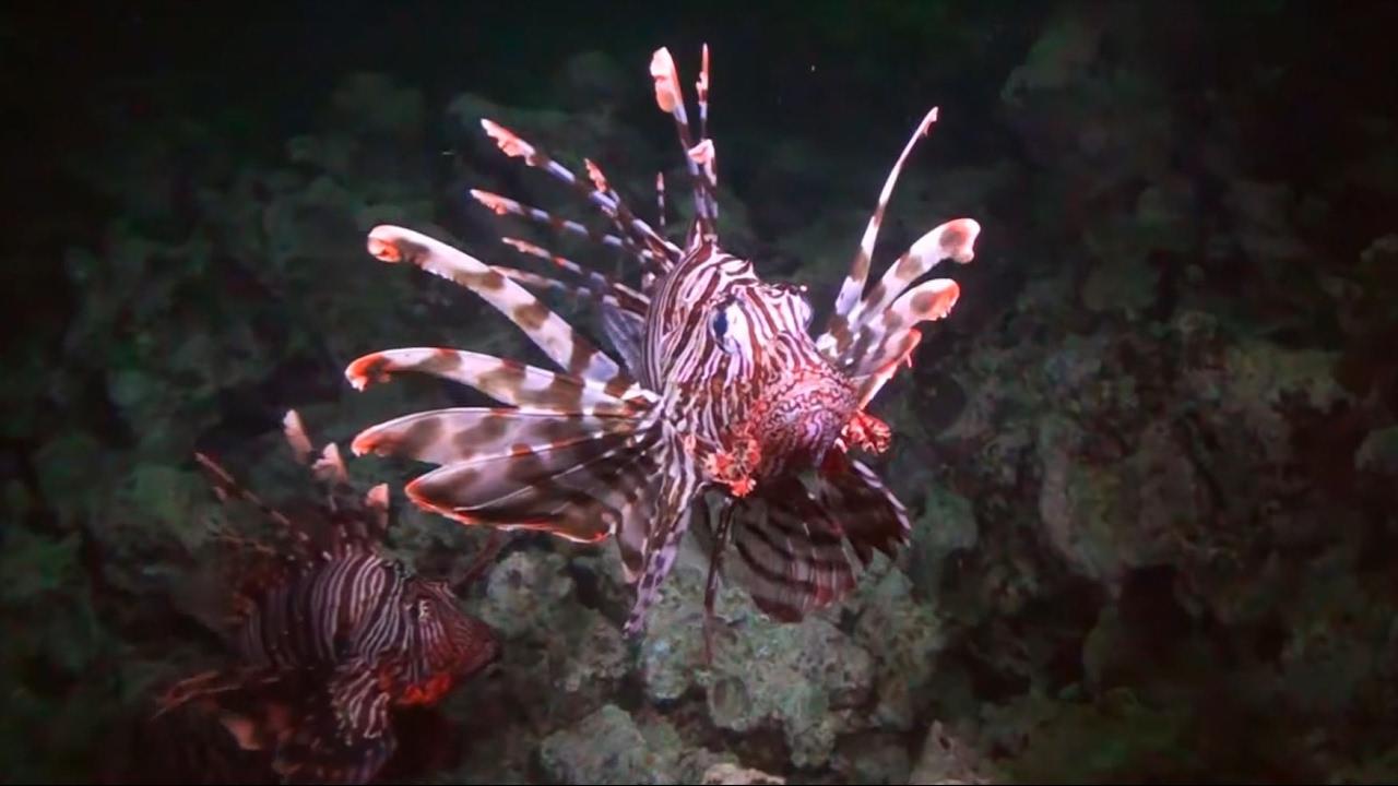 Das Korallenriff