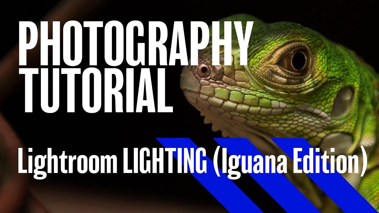 Lightroom LIGHTING workflow! How to make an Iguana Glow.  sc 1 st  YouTube & Lightroom LIGHTING workflow! How to make an Iguana Glow... - YouTube azcodes.com