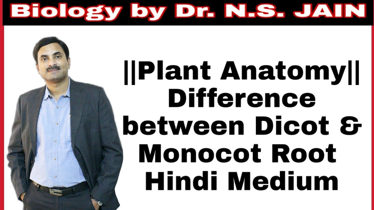 Difference Between Dicot Monocot Root Plant Anatomy Class 11th