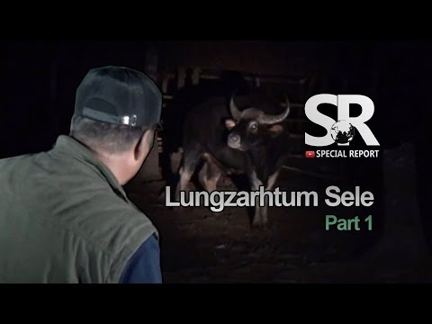SR : Lungzarhtum Sele [Part-1] [31.3.2017]