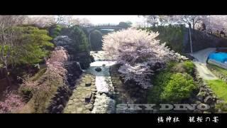 空撮 長崎県 雲仙市 橘神社 桜