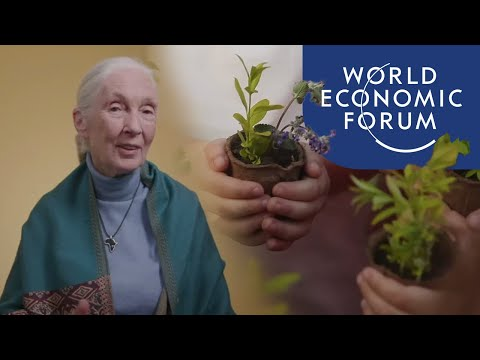 Jane Goodall On The Importance Of Planting Trees | Ways To Change The World