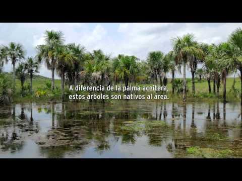 Entre el agua y el aceite de Palma