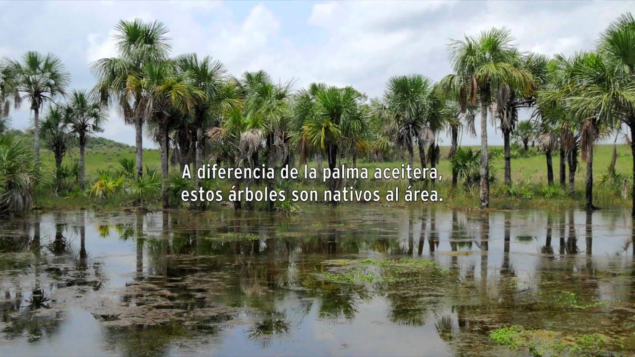 Entre el agua y el aceite de palma youtube for Reformas de fachadas en palma