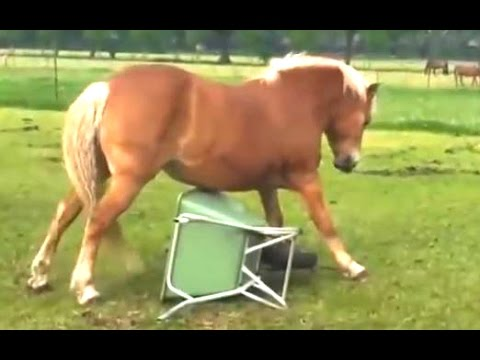 Funny Horse Videos Compilation 2014 [NEW] - YouTube