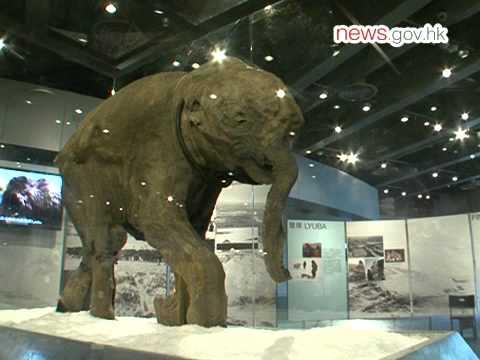 Mammoth Calf Lyuba Wins HK Hearts (27.5.2012)