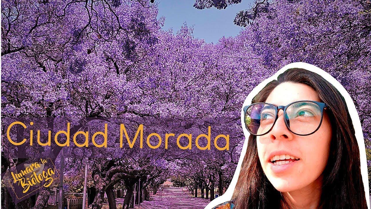 Historias de Jacarandas