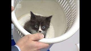 Не выбрасывайте животных: котята ищут дом!